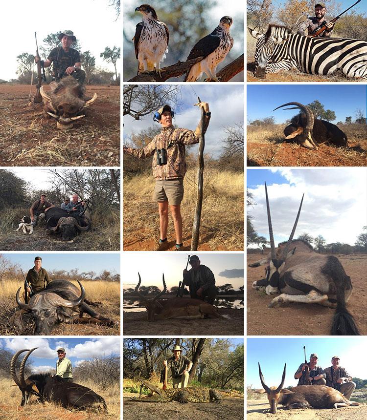 Tally-Ho Hunting Safaris - newsletter September 2017